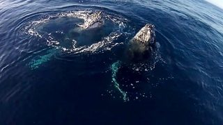 Playful whales leap for camera - Video