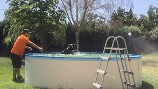 Doggy paddle – Pooch refuses to leave the pool despite owner forcing him out - Video