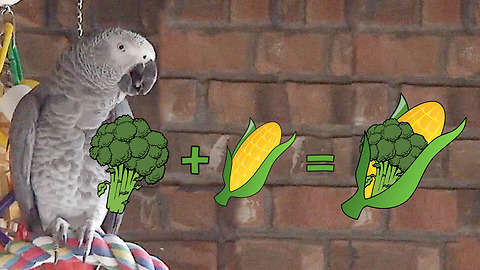 Genius parrot invents new word for favorite vegetables