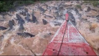 Boat takes a scary voyage across a river full of alligators