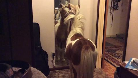 Funny Pony Horse Sees His Reflection In A Mirror For The First Time