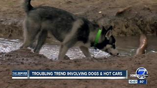 Disturbing pattern: Pets left in hot cars in Jefferson County - Video