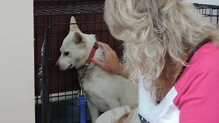 Inside look into dangerous dog rehabilitation - Video