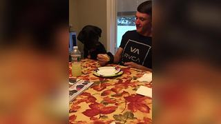 Funny Dog Wants A Bite Of A Sandwich - Video