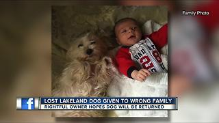 Lakeland family pet wanders off from home, gets adopted to another family by accident - Video