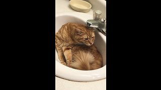 Silly cat loves hanging out in the bathroom sink