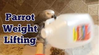 Einstein the Parrot knows how to stay in shape