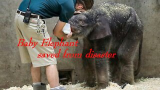 Baby Elephant saved from disaster