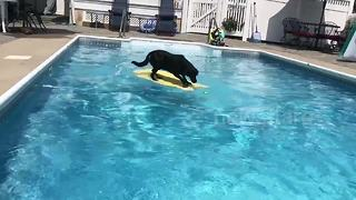 Dog fetches ball from pool – without getting wet - Video