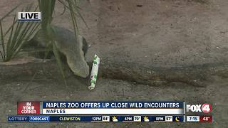 Naples Zoo offers up-close wild encounters - 7am Live Report - Video