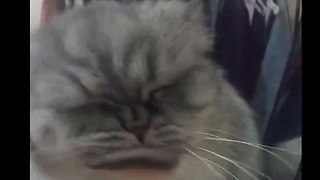 Fluffy Cat Shows Off Flawless Makeup Routine