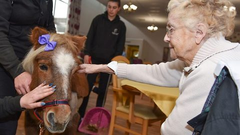 Old age pony: Elderly shetland pony finds new lease of life visitng old people's homes to keep residents company
