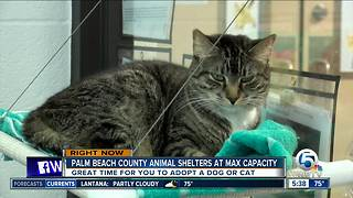 Animal shelters at capacity