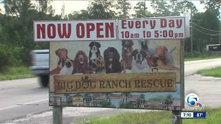 Big Dog Ranch Rescue sends teams to Texas - Video
