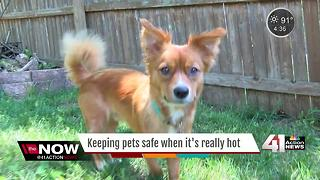 Protect your pet from summer heat & heat stroke - Video