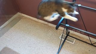 Cat jumps onto table with top removed and falls right through - Video