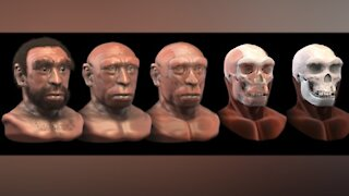 Ancient human species may have died from climate change