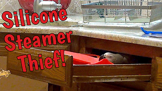 Sneaky parrot steals silicone steamer - Video