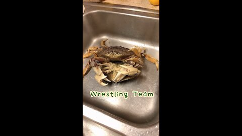 Dungeness Crab Feast