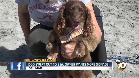 Dog swept out to sea rescued, owner asks for more signage