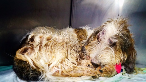 Unbelievable recovery for dog thrown out of speeding car