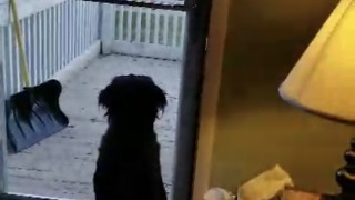 Dog reaction everytime he saw his bestfriends - Video