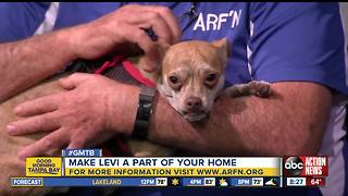 Nov. 5 Rescues in Action: Levi long for permanent home - Video