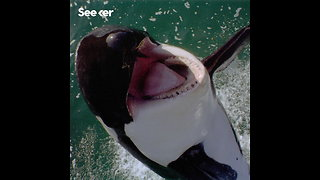 The Future of Killer Whales Isn't Looking Good