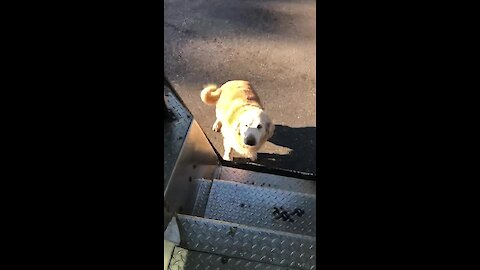 UPS driver keeps treats in truck for the doggies