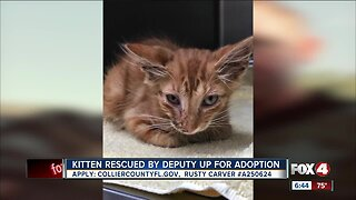 Kitten up for adoption after being hit by semi truck