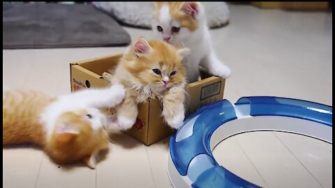 cute kittens are playing