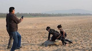 Tourists toy with sea turtles for selfies in India - Video