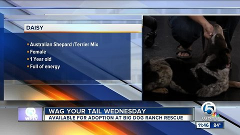 "Wag Your Tail Wednesday: Valentino and Daisy each need a ""FURever"" homes"