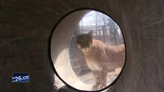 Animals welcome visitors to Lincoln Park Zoo - Video