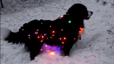 Festive dog wears Christmas lights in the snow