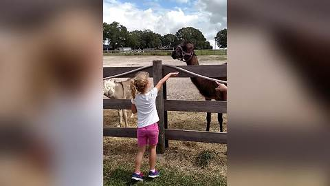 Funny Llama Spits On A Young Girl