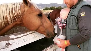 Baby Can't Stop Giggling At A Friendly Horse