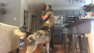 Alaskan Malamute Gets Jealous Every Time People Hug