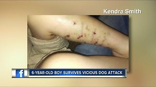 Dog attacks 6-year-old boy - Video