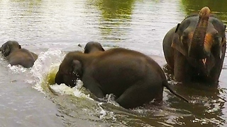 Baby elephants & mothers dive underwater while crossing river