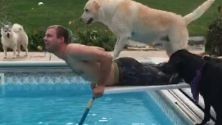 Epic Diving Board Fail Involving 1 Man & 3 Dogs - Video