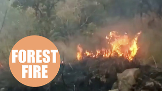 Nine people have died after a group of nearly 40 trekkers were trapped by a forest fire - Video