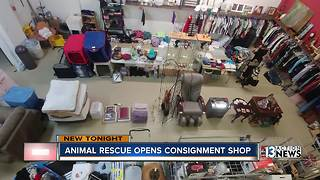 Las Vegas animal rescue opens thrift store - Video