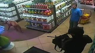 Way to Grow robbery - Video