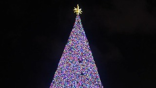 Delray Beach Christmas tree glowing for the holiday - Video