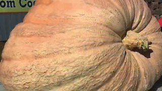 William C. Gourd, a 1,500 pound pumpkin, makes its debut - Video