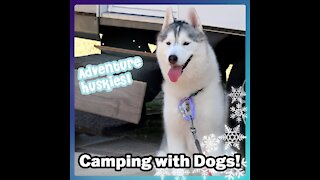 Adventure Huskies! CAMPING WITH DOGS!