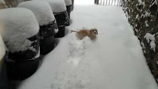 Adorable puppy loves playing in the snow!