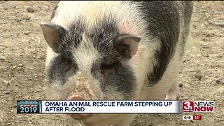 Animals Displaced by Floods
