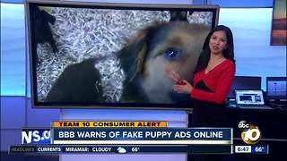 BBB warns of fake puppy ads online